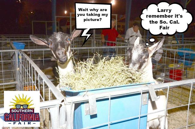 Goats FI