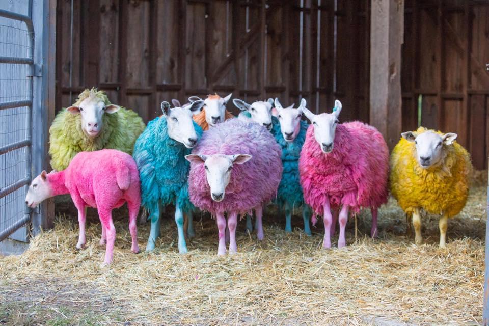 Tie Dye Sheep